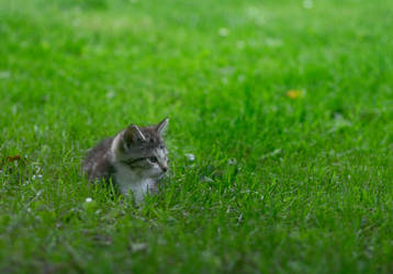 KittyStock01