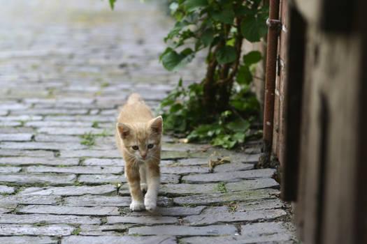 KittyStock03