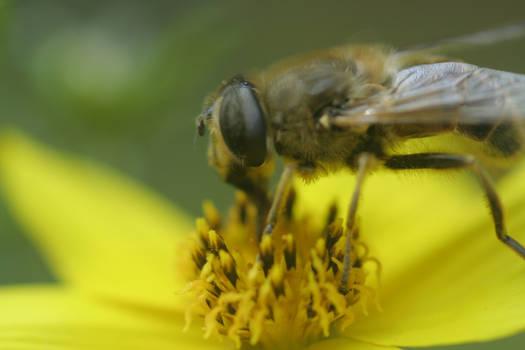 Bee Stock 02