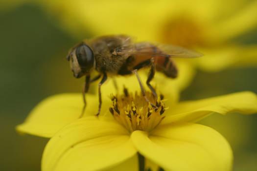 Bee Stock 03