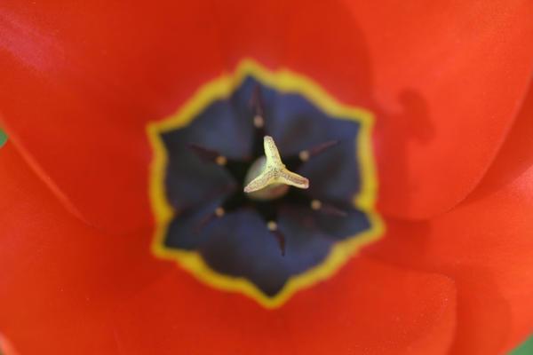 Flower03 by JaneDoeStock