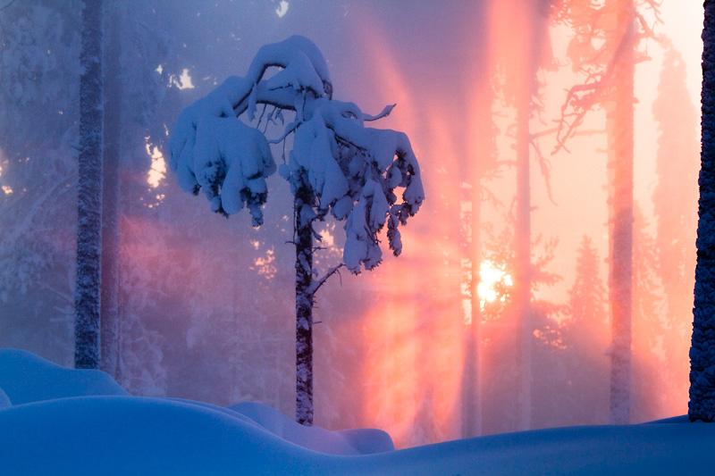 Tree6 by markotapio