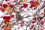 bird7 by markotapio