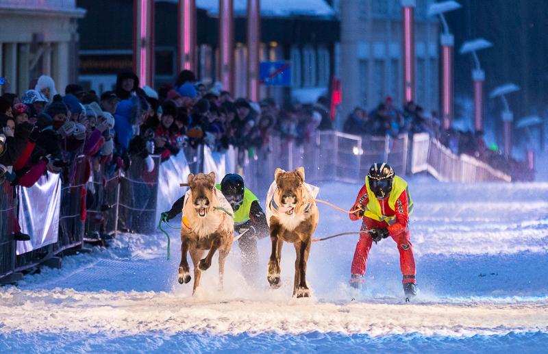 Rovaniemi Reindeer Sprint Race by markotapio