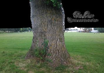 Tree Base by TinaLouiseUk