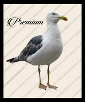 Seagull Png by TinaLouiseUk