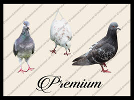 Pigeon Png pack by TinaLouiseUk