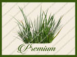 Grass Rushes png