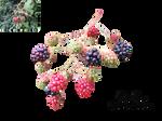 Berries by TinaLouiseUk