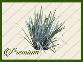 Grass Reed png by TinaLouiseUk
