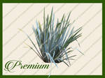 Grass Reed png