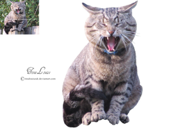 Tabby Cat by TinaLouiseUk