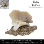 Shell and sand by TinaLouiseUk
