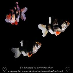 Fishies by TinaLouiseUk