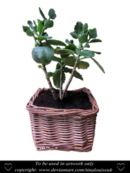 Potted plant by TinaLouiseUk