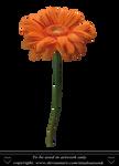 Orange Daisy by TinaLouiseUk