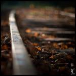Autumn Track