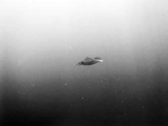 squid by tunccambaz