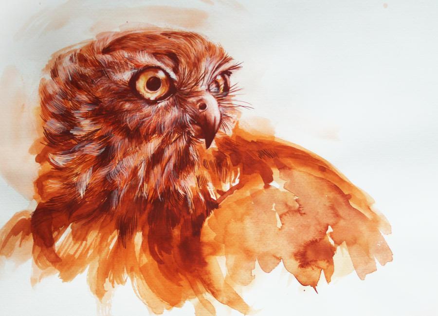 Hawk by LumiLumi