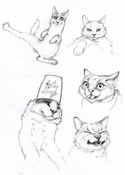 cat sketches 1
