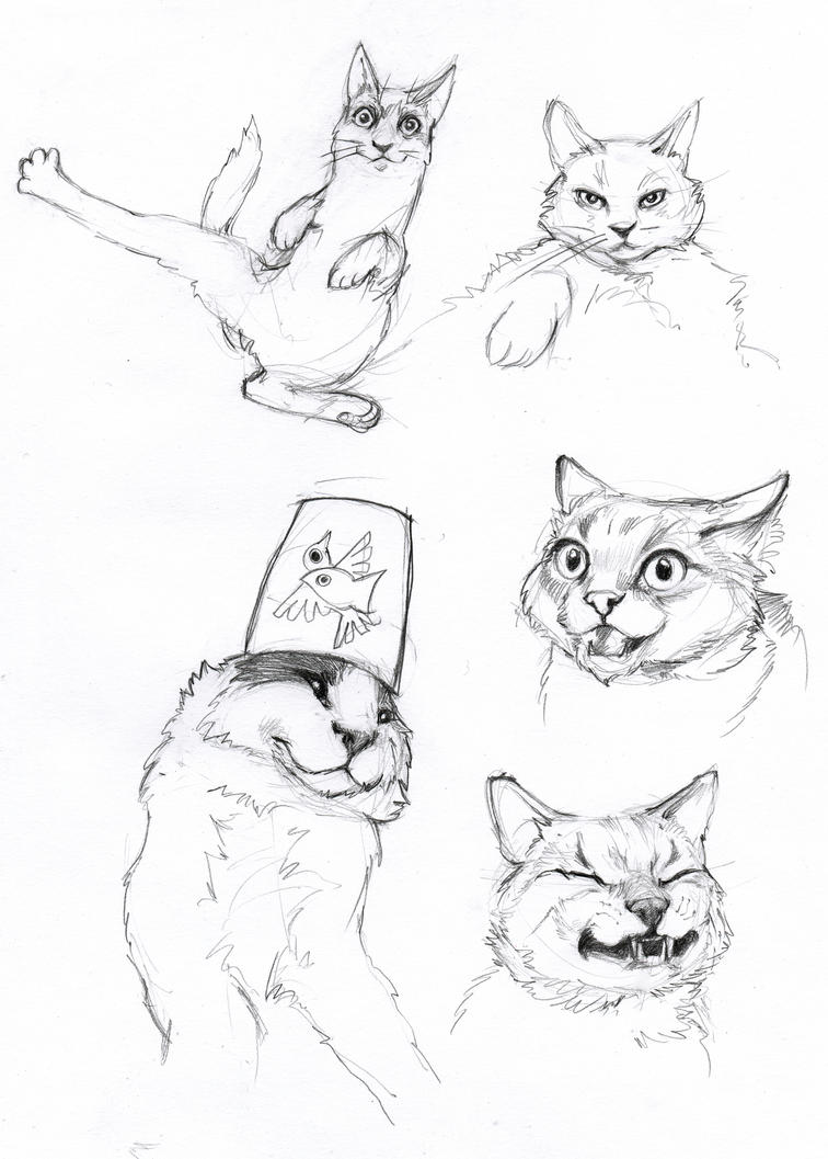 cat sketches 1 by LumiLumi