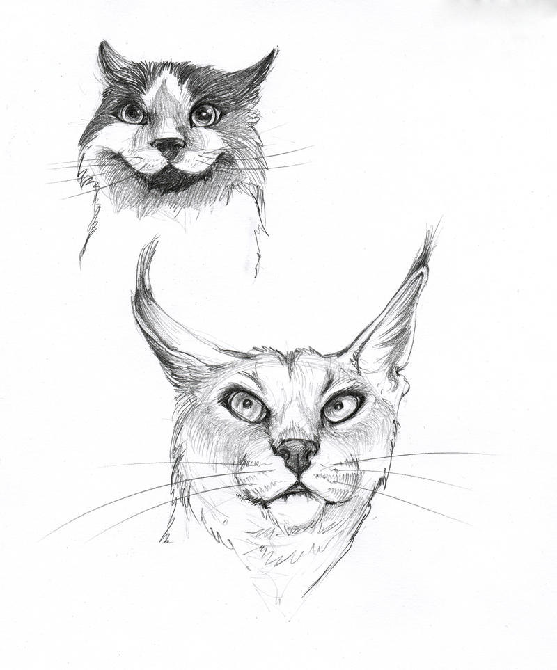 cat sketches 2 by LumiLumi