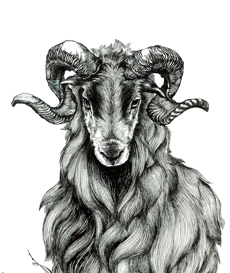 study of ram by LumiLumi