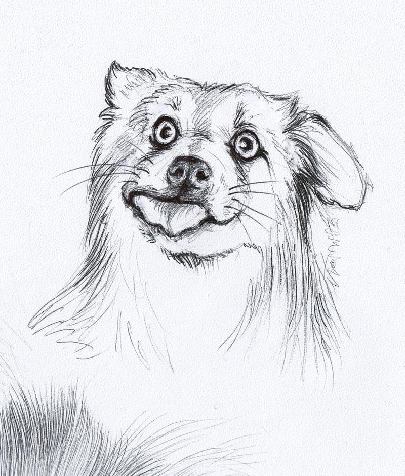 silly dog by LumiLumi