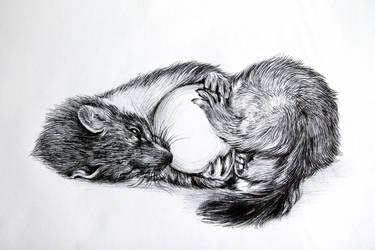 weasel by LumiLumi