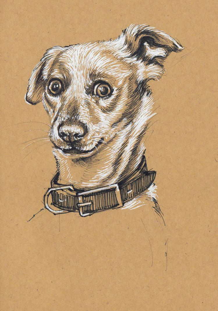 Dog by LumiLumi