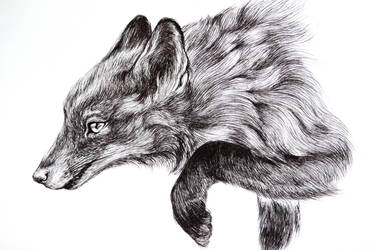 study of fox