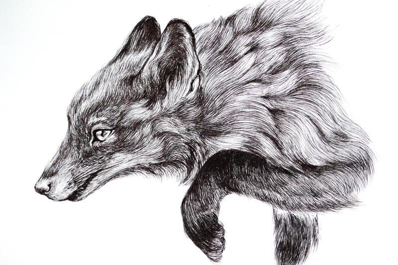 study of fox by LumiLumi