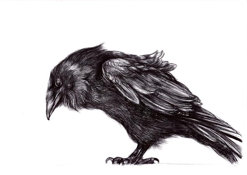 raven by LumiLumi