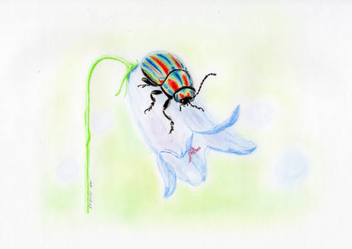 The rainbow leaf beetle