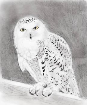 Hedwig :)