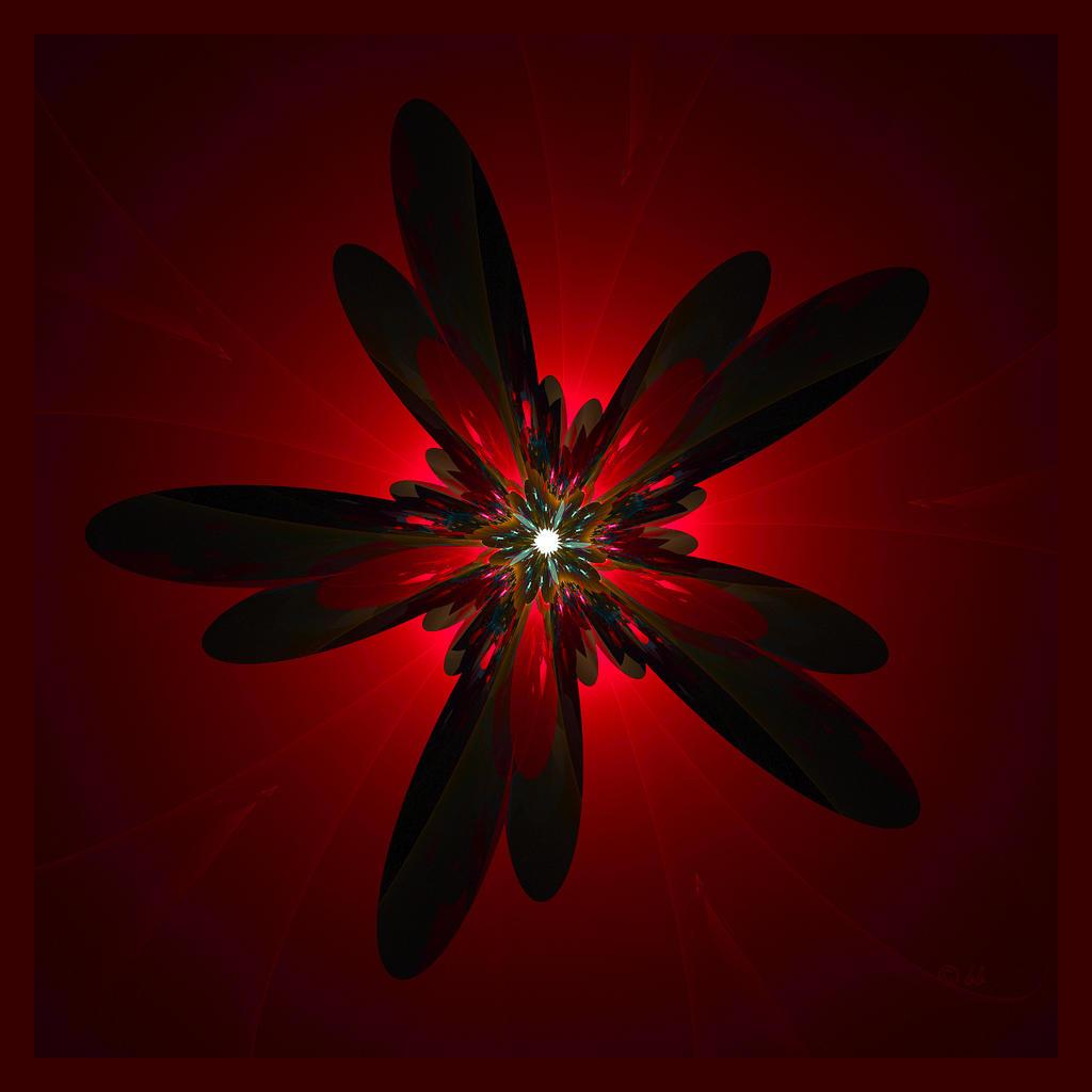 Night Flower II by baba49