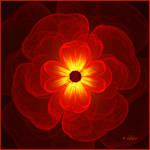 Inner Glow Of A Flower