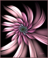 Flower In Pink by baba49