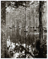 Southern Swamp by semeuse by 291
