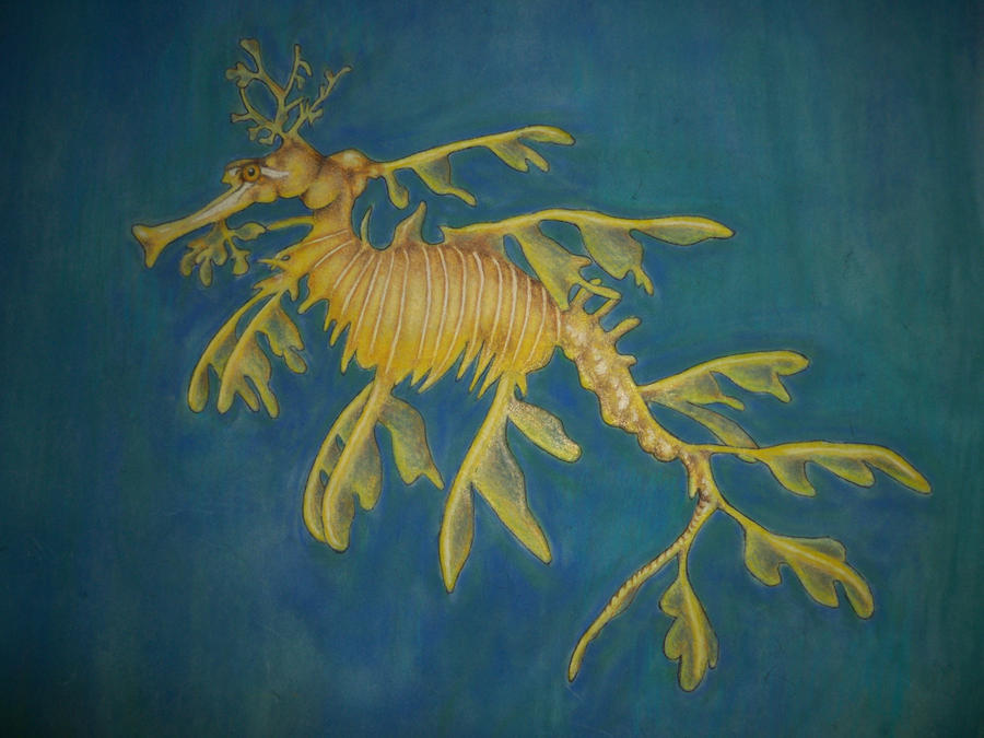 leafy sea dragon close up by the-jabber-wocky on DeviantArt
