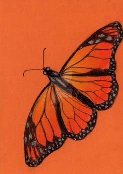 31. Monarch Butterfly