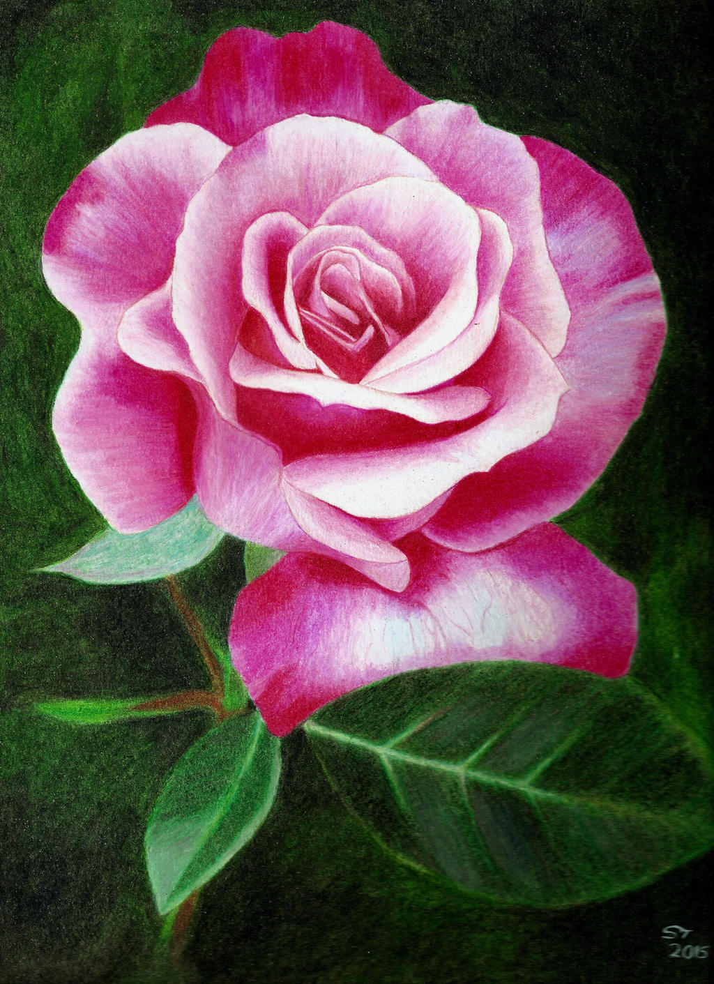 Prismacolor Pencil Rose Drawing by SomethinSweet on DeviantArt