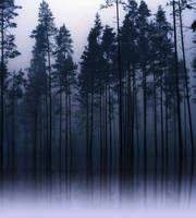 morning fog 2 by Iridescent-happinesS