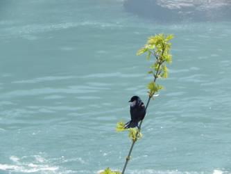 Little Bird by celebren