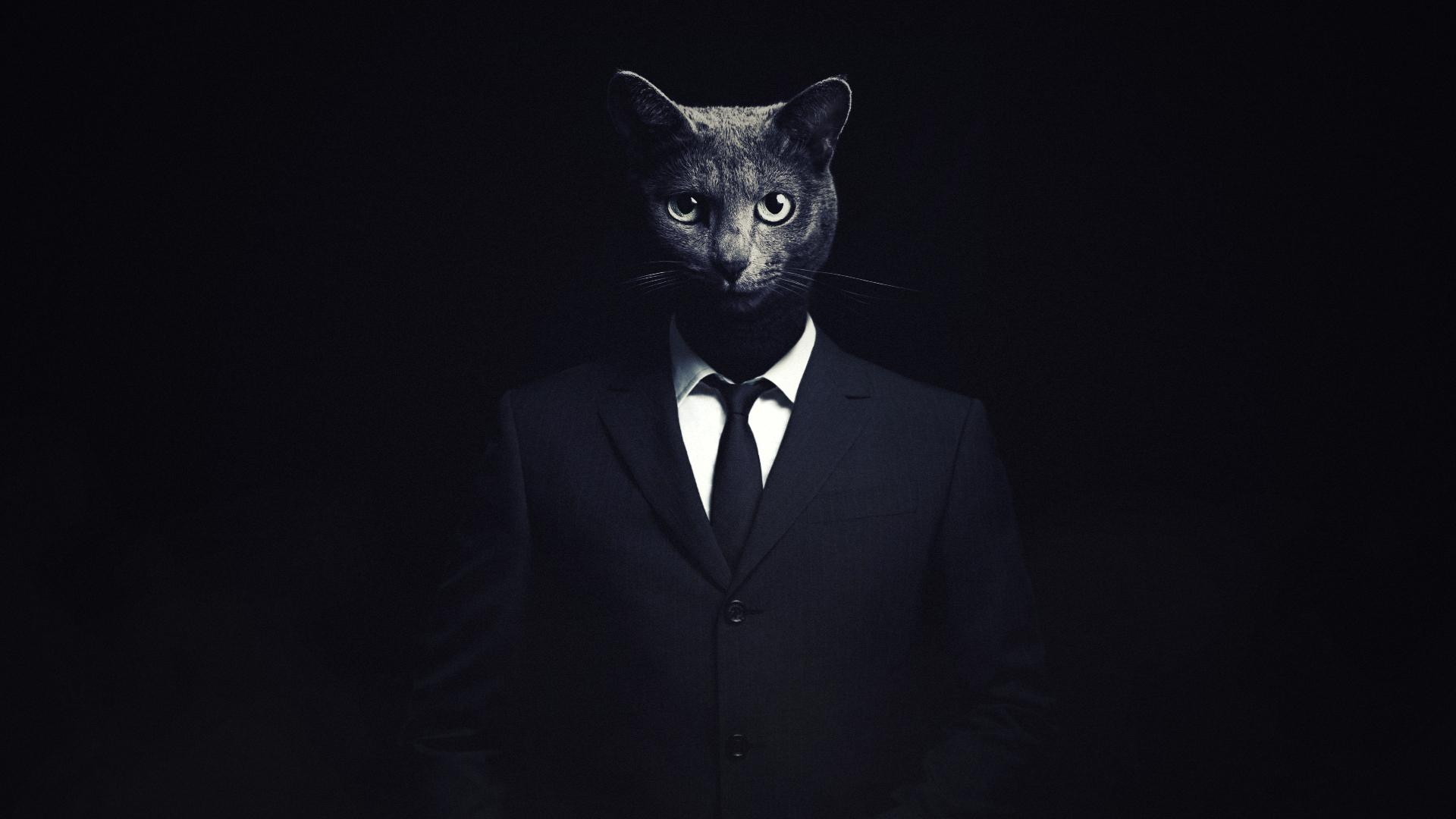 Cat the killer by Hshamsi