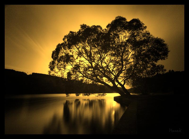 Tree of My Life by mucek