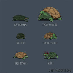 Know Your Turtles by JustynaDorsz