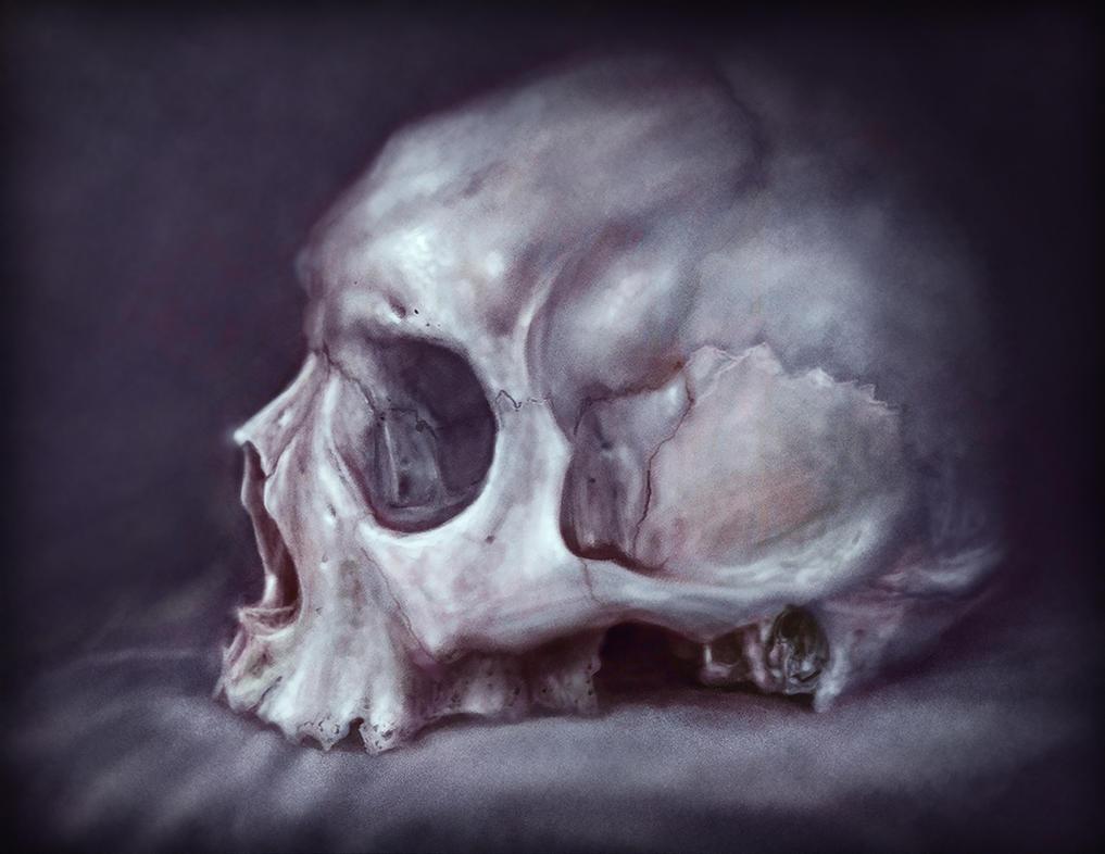 Skull Study by RodgerPister