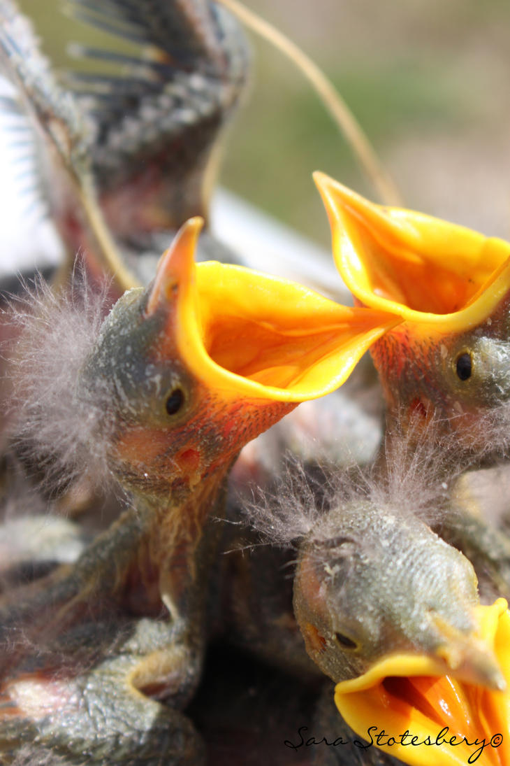 little black birds 14.1 by StotesMcGoats