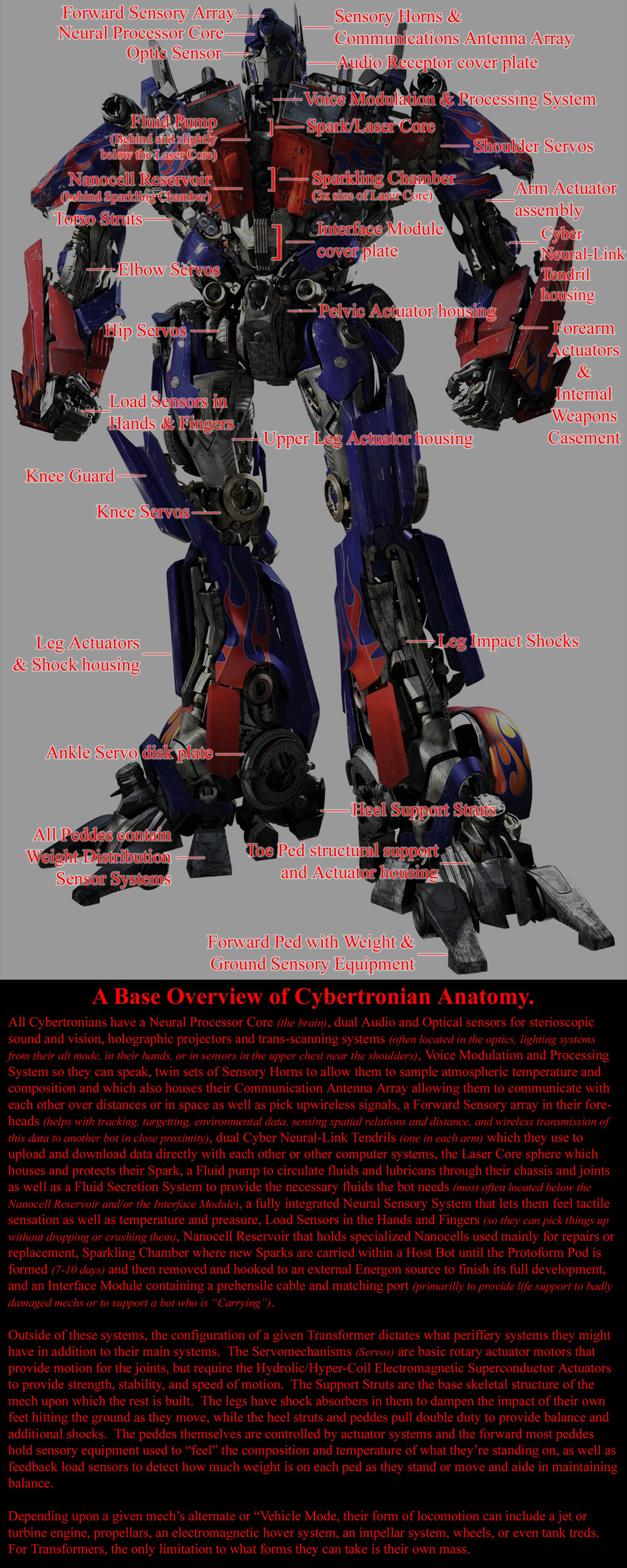 Transformer Structural Anatomy Layout by Leathurkatt-TFTiggy